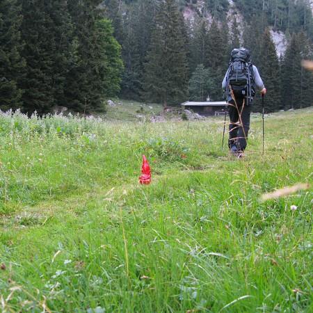 Im Gänsemarsch über die Alpa-Alm