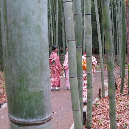 Three girls dressed in kimono at Kyoto's Arashiyama bamboo forest