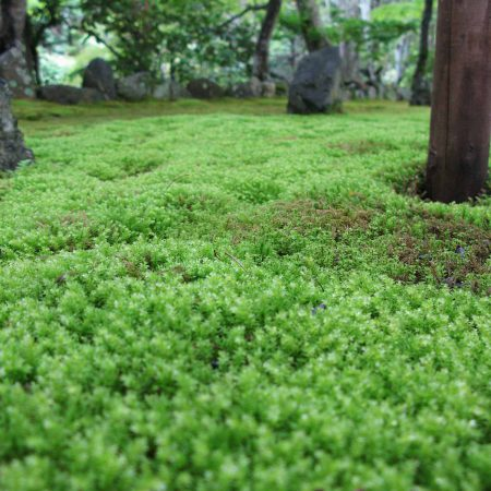 Moosgarten in Kyoto