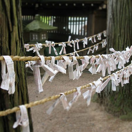 Omikuji fixed to ropes between pine trees