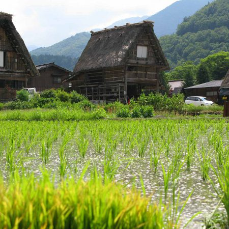 Houses and a rice field in Shirakawa-gō
