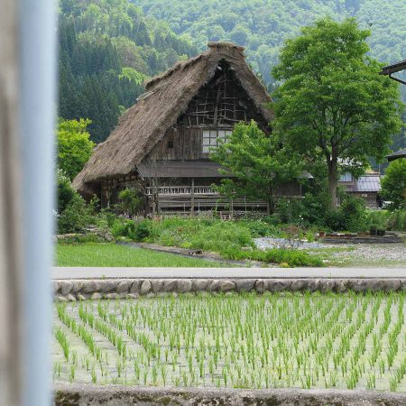 House with a rice field in front in Shirakawa-gō