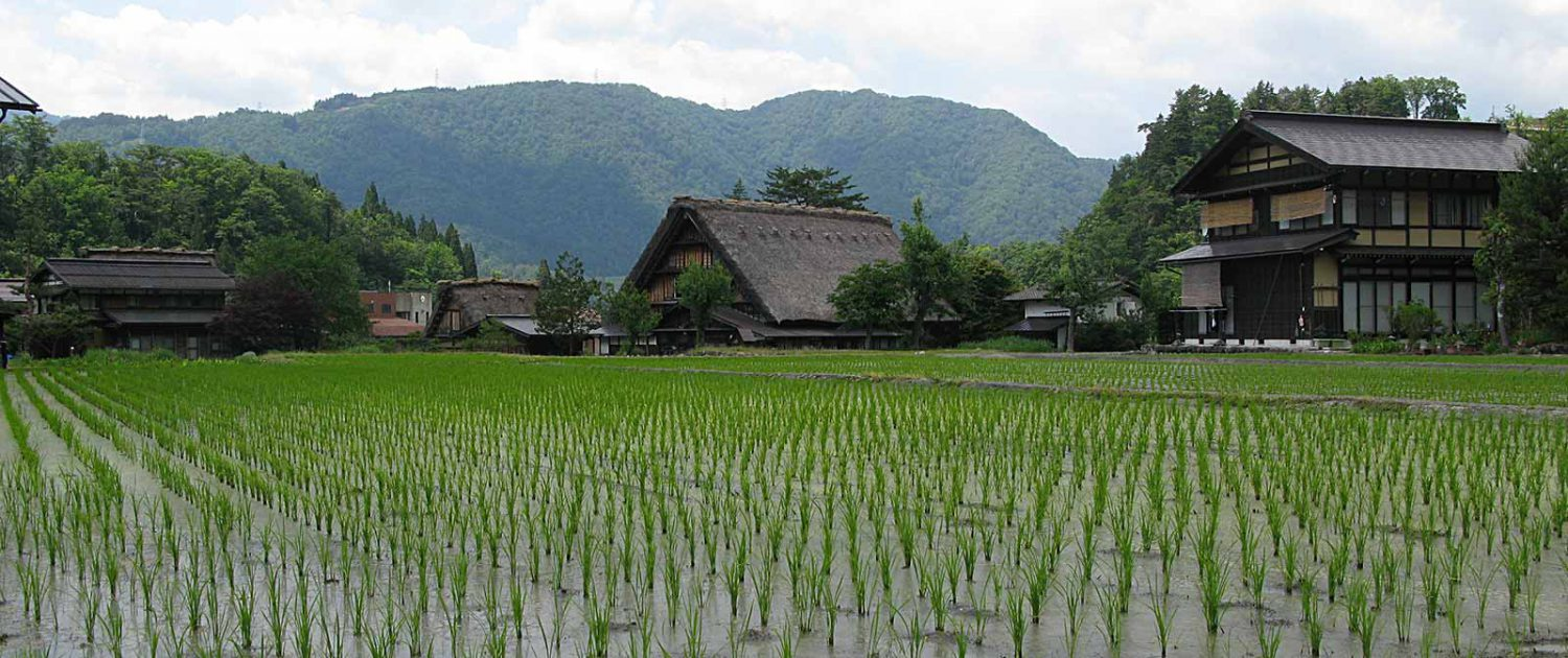 Rice field and houses in Shirakawa-gō