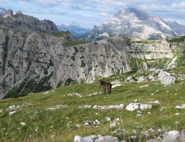 Hochalm bei der Auronzo-Hütte, Sextner Dolomiten