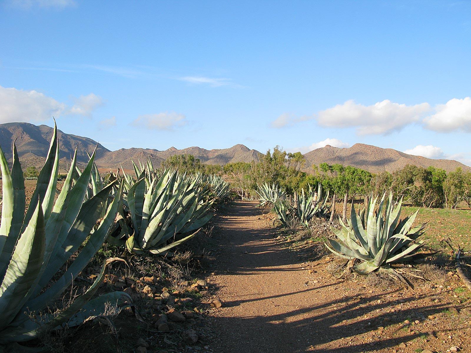 Parque Natural del Cabo de Gata-Níjar in Andalusien