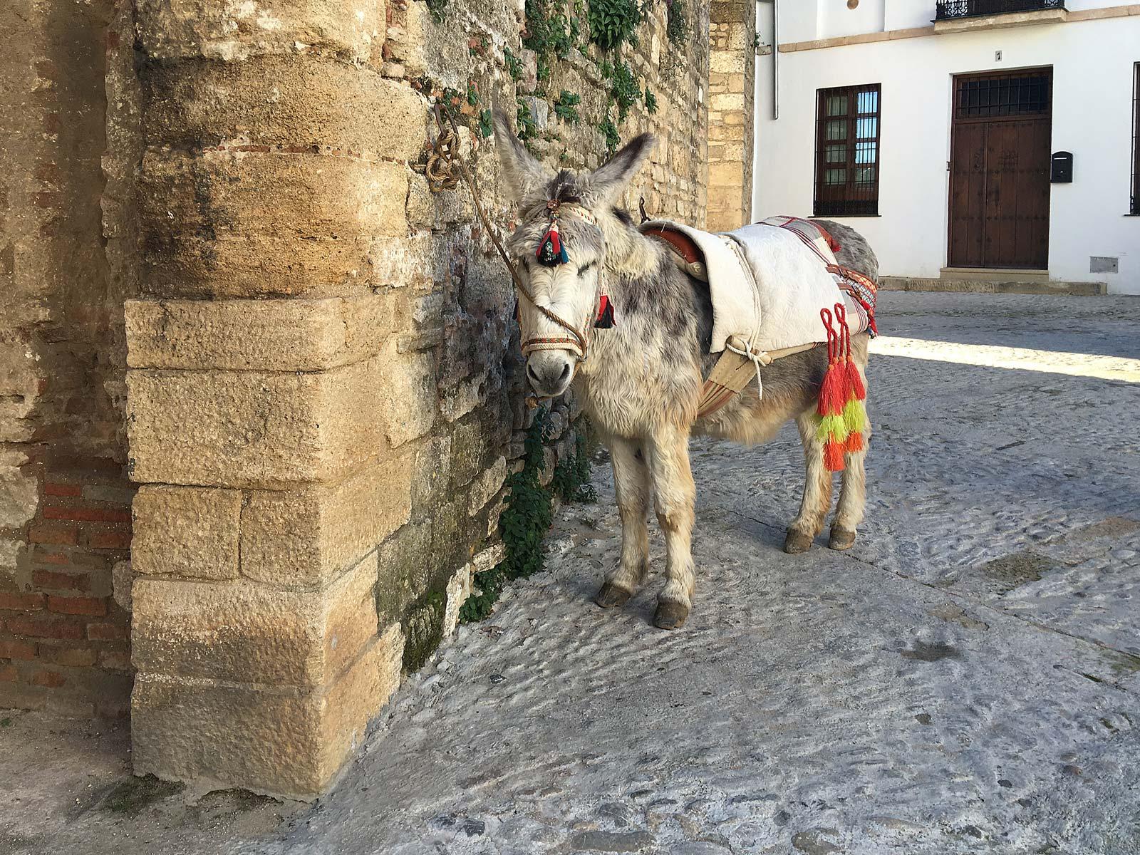 Festively decorated donkey in Ronda