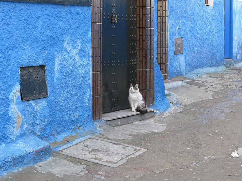 Eine Katze sitzt vor der Haustür in einer blauen Gasse Rabats