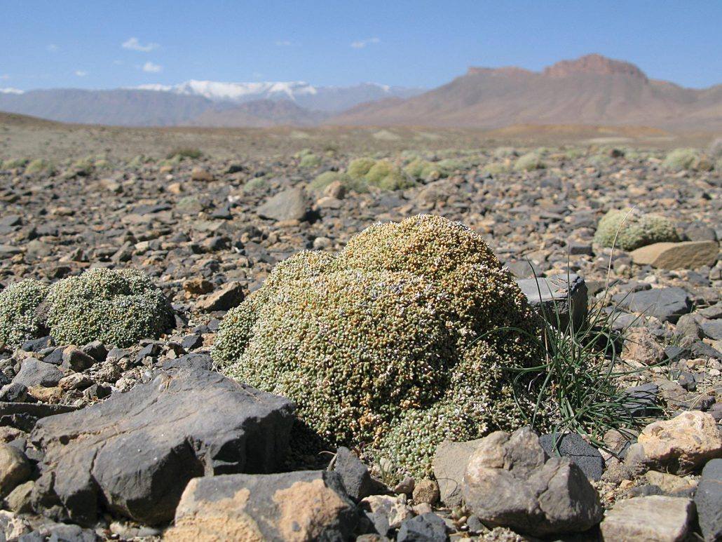 Rocky desert at Atlas mounatins in Morocco