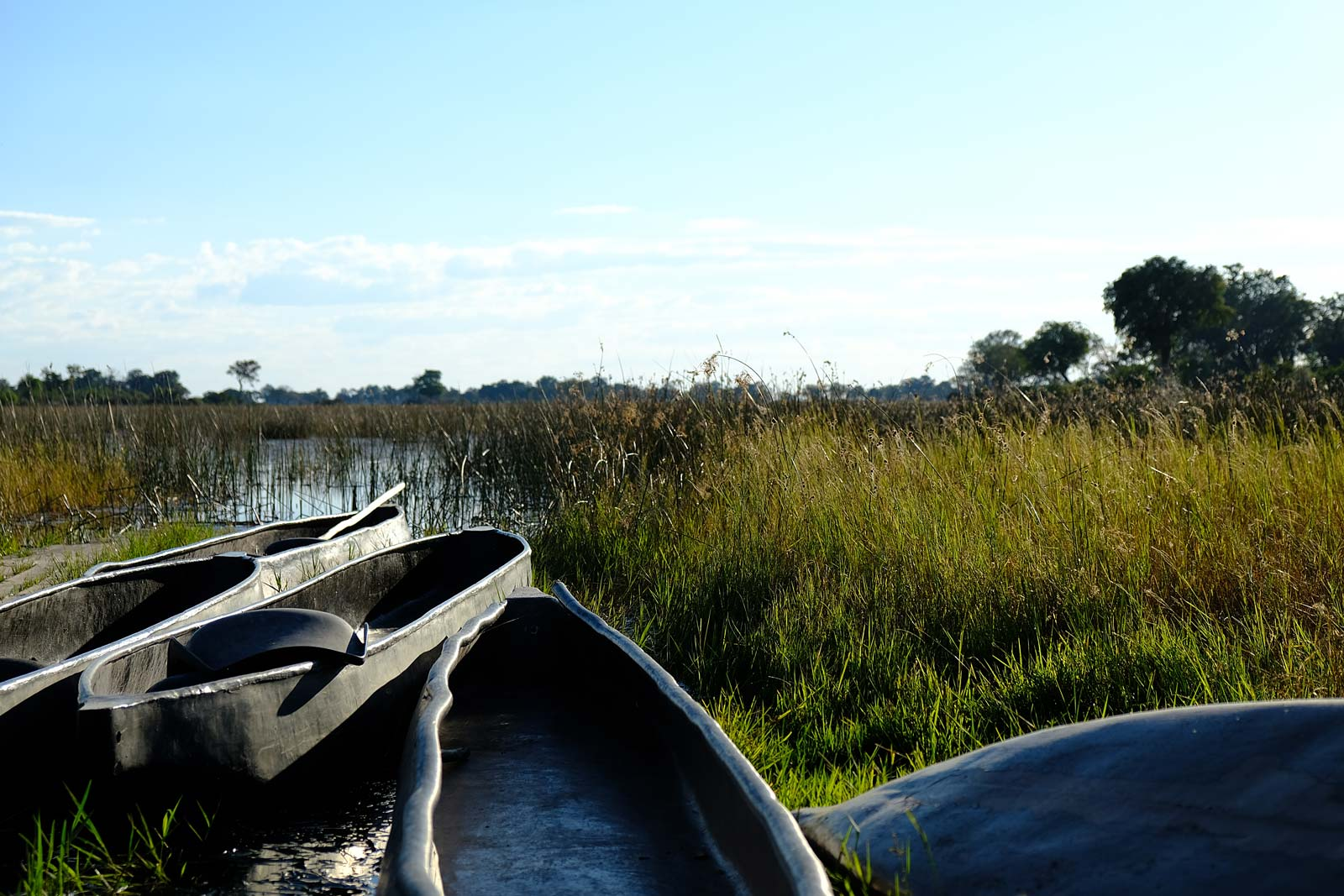 Mokoro ready for a river trip in the Okavango Delta