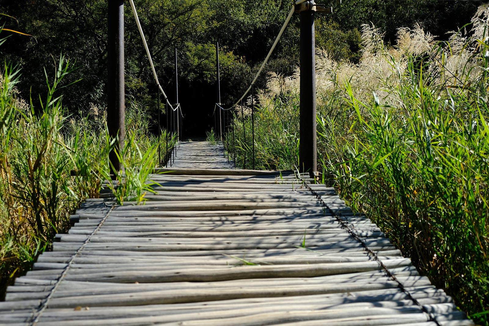 Holzsteg auf der Taaibos Farm in Südafrika, Waterberg