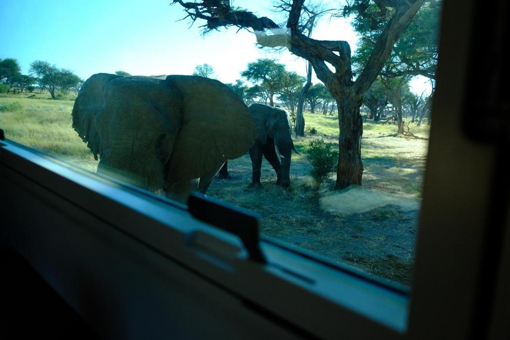 Ein Elefant schaut in das Fenster des Wohnmobils