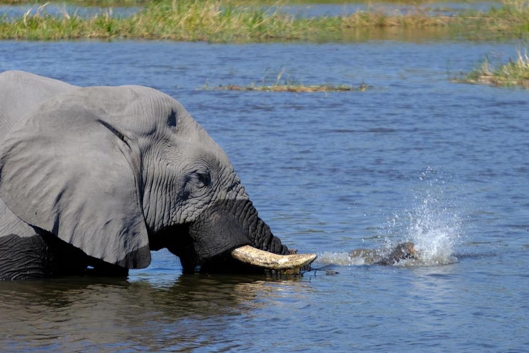 Elefant badet