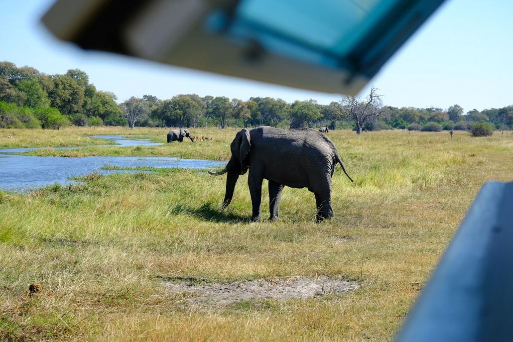Elefanten am Khwai River