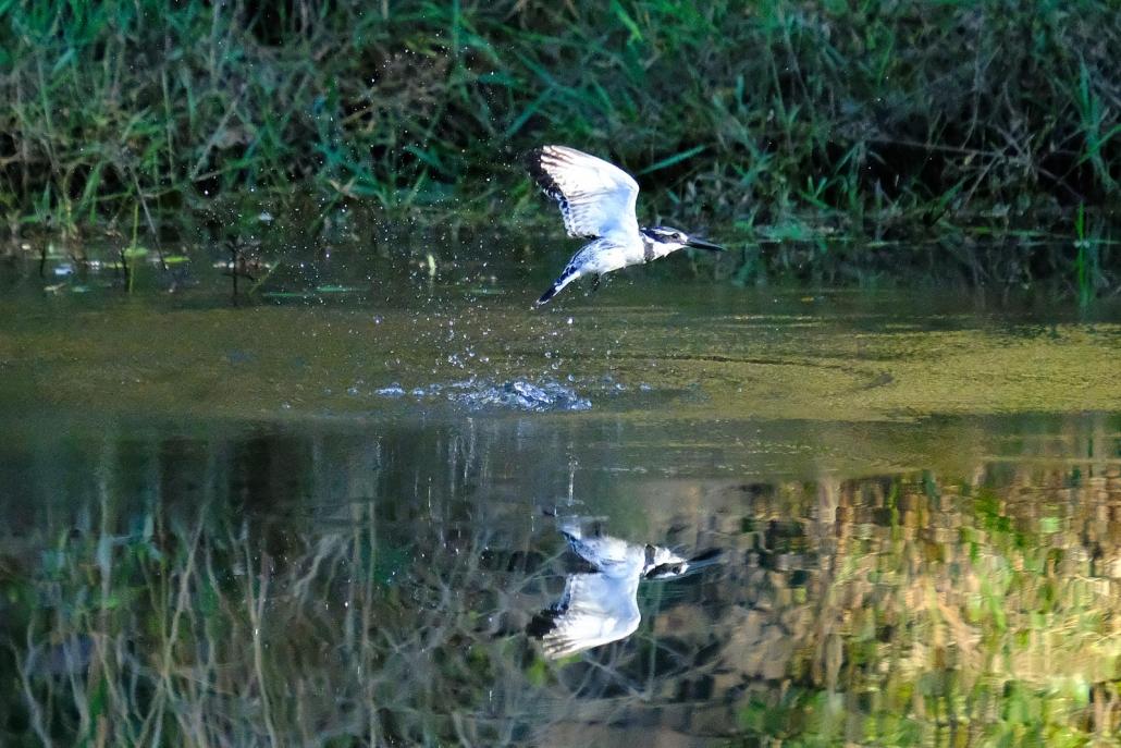 Wasservogel steigt aus dem Wasser