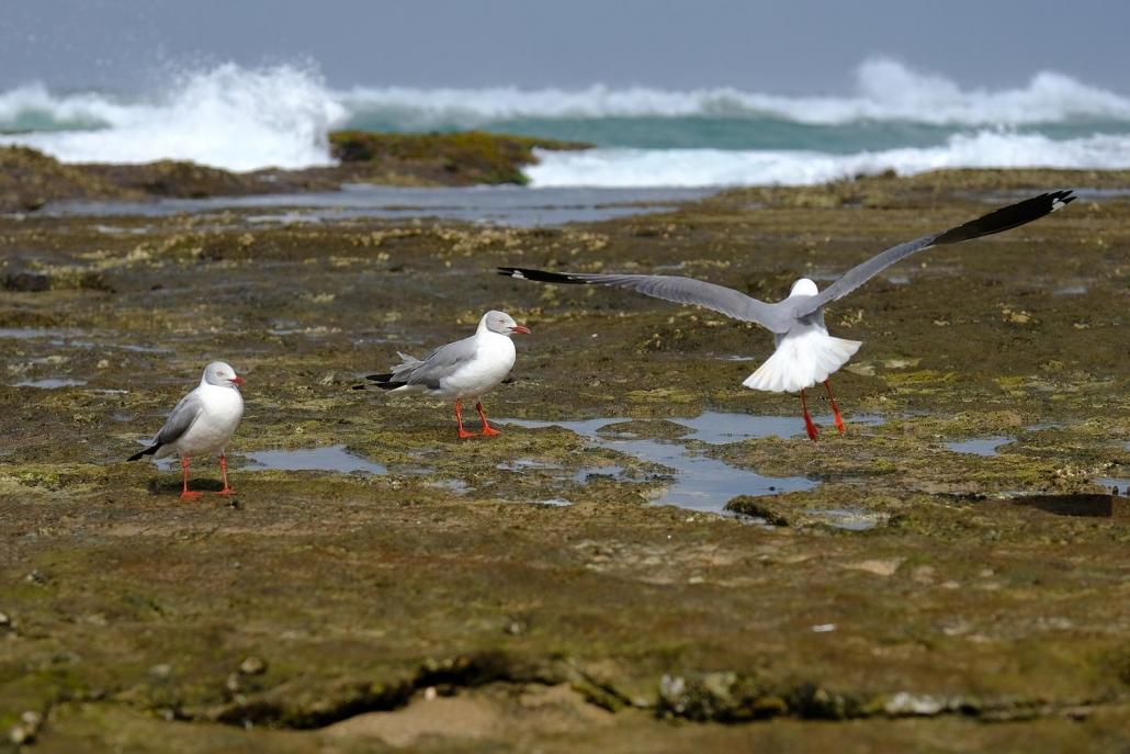 Seevögel in der Sodwana Bay