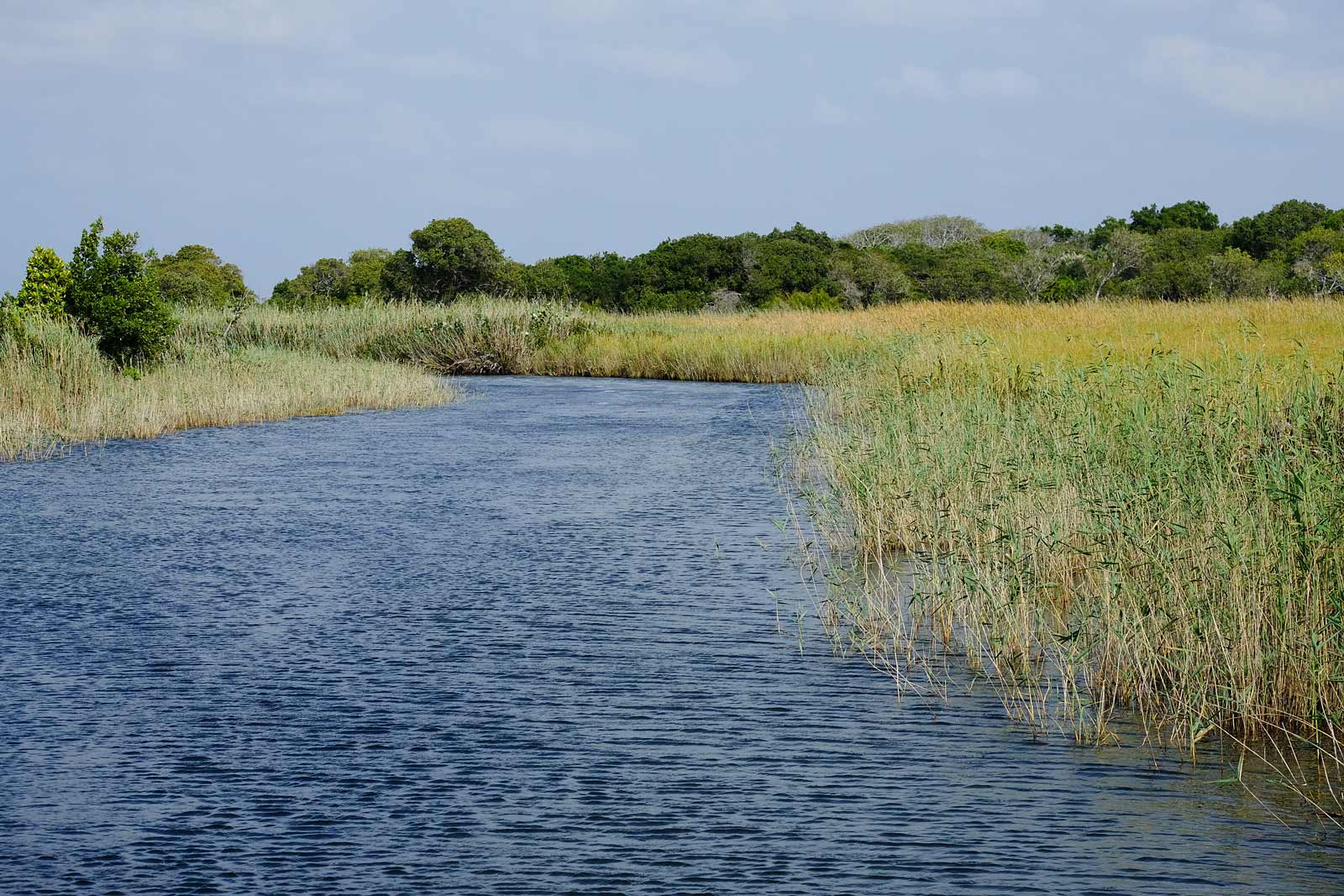 Wasserweg zwischen grünem Schilf in der Kosi Bay, Kwazulu Natal